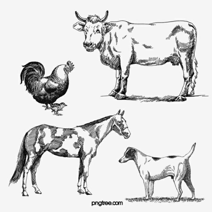 dibujos de animales, ideas sobre como dibujar una gallina, vaca, caballo, perro, dibujos faciles a lapiz y técnicas para sombrear