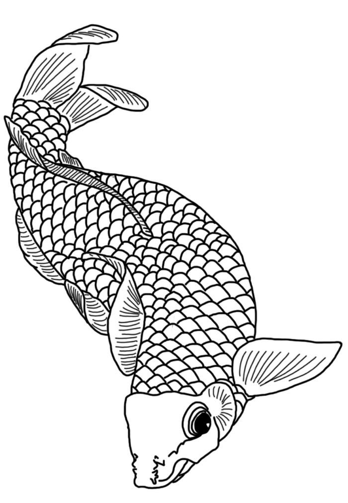 dibujos chulos de animales, dibujo del pez Koi, ideas de dibujos con animales, dibujos para calcar originales en imágenes
