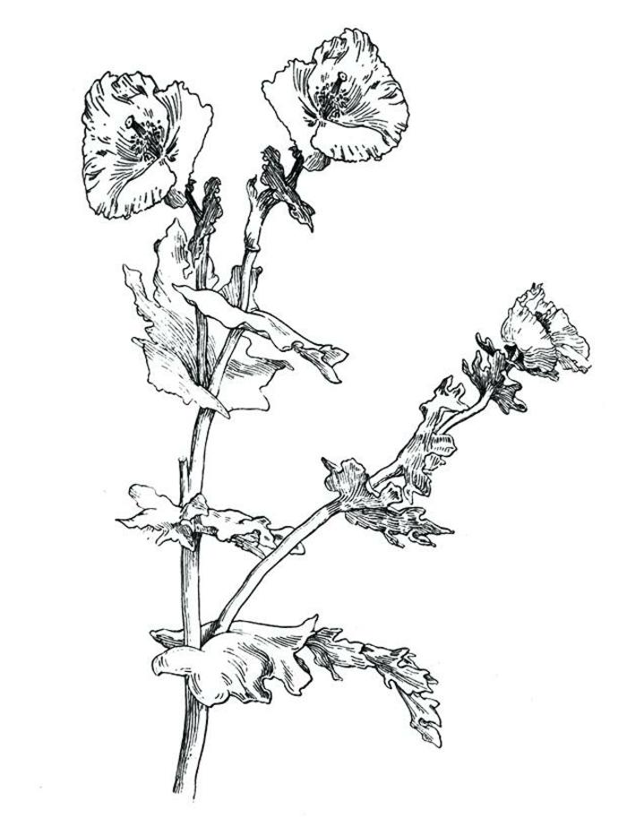 aprender a dibujar objetos, dibujos de flores a lápiz, ideas de dibujos bonitos y originales, imagenes en blanco y negro