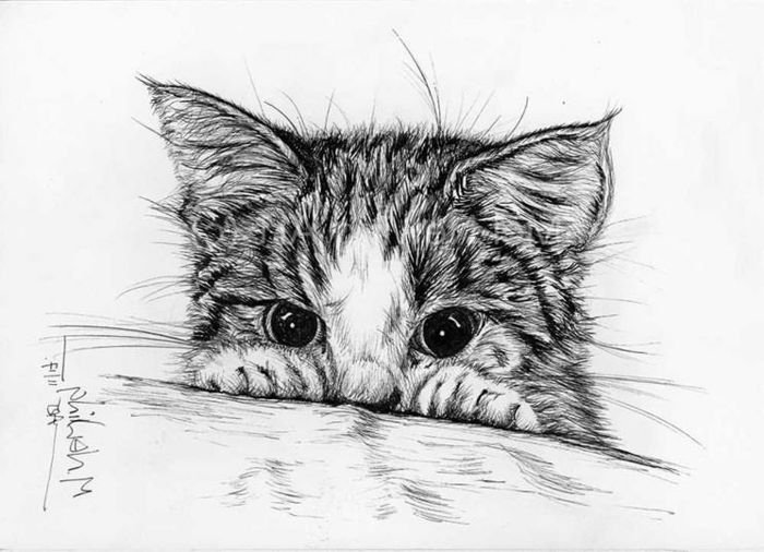 precioso gato dibujado en estilo realista, adorable gato dibujado a lápiz, dibujos de animales en estilo realista, ideas de dibujos