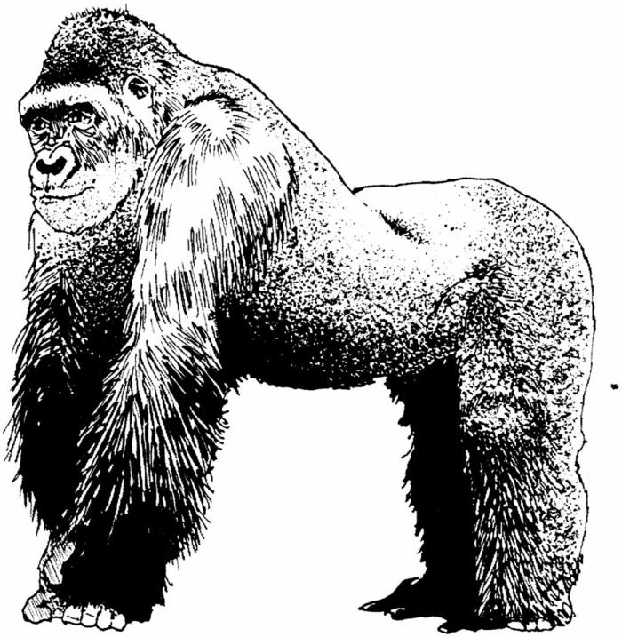 los mejores dibujos de animales hechos con lápiz negro, dibujos para calcar y redibujar, ideas de dibujos en fotos