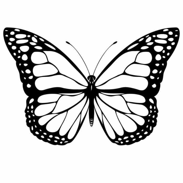 preciosos dibujos para calcar, dibujo de mariposa, las mejores ideas de dibujos para niños y principiantes, dibujo mariposa