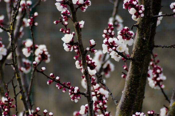 flores de frutales florecidos en primavera, imagenes de la naturaleza que enamoran, las mejores imagenes para descargar