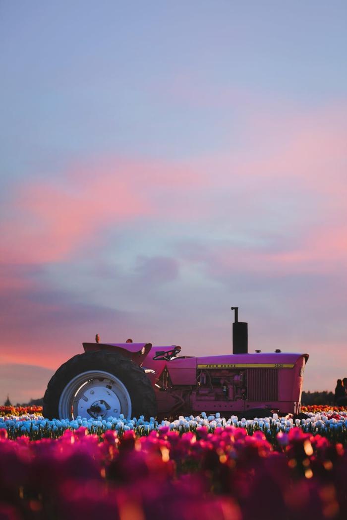 paisajes de primavera y verano que simplemente enamoran, campos de tulipanes florecidos, imagenes de la naturaleza