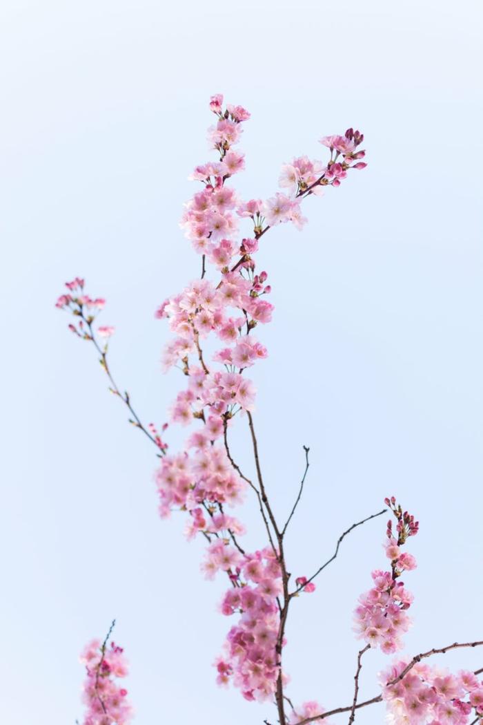 adorables propuestas paisajes de primavera originales y faciles, imagenes para descargar preciosas, fotos de flores