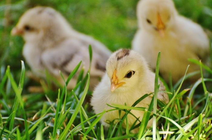 imagenes de animalitos tiernos, fotos de animales y flores, annimalitos oriignales y tierno, fotos de animales hermosos