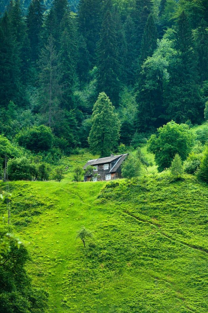 fotos de naturaleza verdes para combatir la ansiedad, imagenes relajantes para usar como fondo de pantalla, campos verdes relajantes