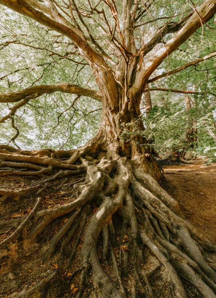 alucinantes ideas de imagenes relajantes fotos de naturaleza bonitas que inspiran, ideas de fondos de pantalla que calman los nervios