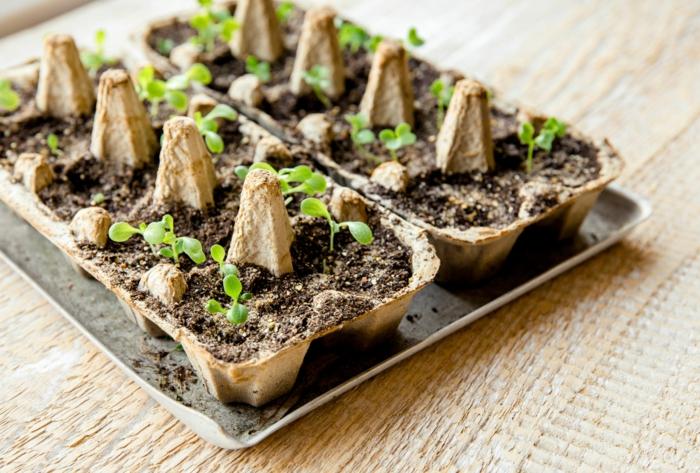 mini macetas con carton de huevo y pequeñas plantas verdes, ideas para la primavera, manualidades faciles con niños