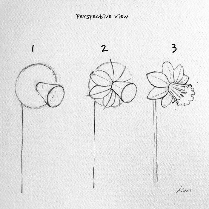 pasos para dibujar un narciso, dibujos de flores faciles y originales, como dibujar una flor de primavera bonita paso a paso