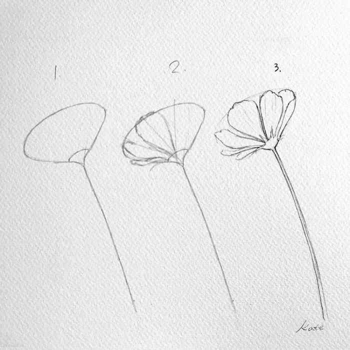 dibujo flor amapola paso a paso, geniales ideas de dibujos sencillos y super bonitos para niños y principiantes en fotos