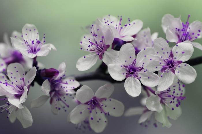paisajes de primavera originales, adorables imagenes de flores, arboles florecidas en blanco y lila, imagenes para descargar