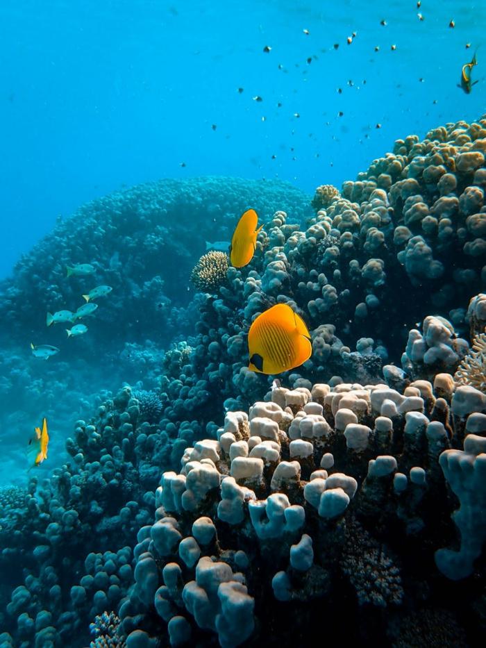 fondos de pantalla chulos con fotos de la naturaleza, preciosa foto del fondo del mar, ejemplos de paisajes de naturaleza
