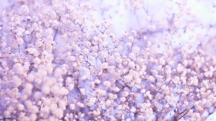 preciosas propuestas de imagenes de flores, arboles florecidos preciosos en fotos, hermosas ideas de fotos de flores