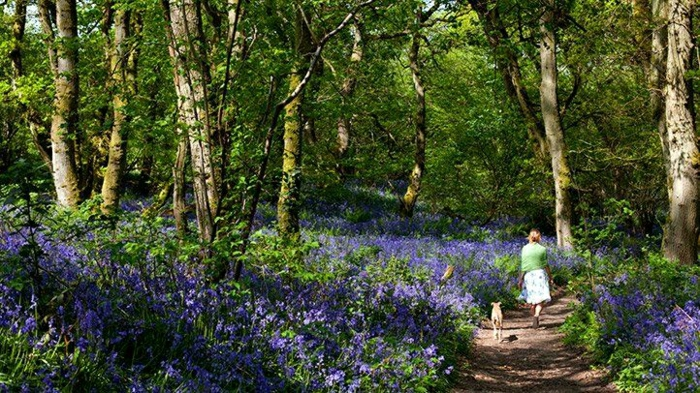 imagenes de primavera que inspiran, imagenes con frases positivas y paisajes naturales para descargar, fotos del bosque
