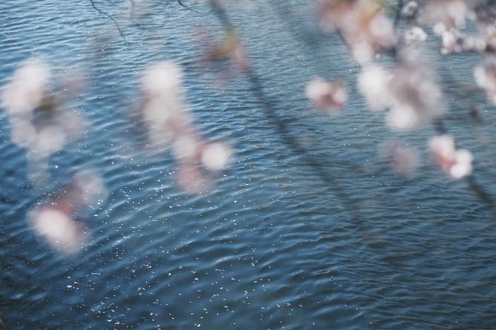 la ternurara y la belleza de la naturaleza en primavera en más de 100 bonitas imagenes, imagenes de la naturaleza