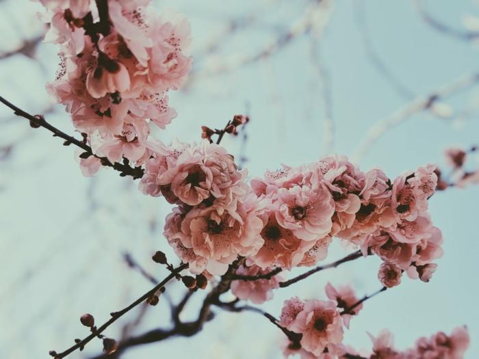 adorables paisajes de primavera para descargar, las mejores ideas de imagenes de flores preciosos, ideas de imagenes fondo