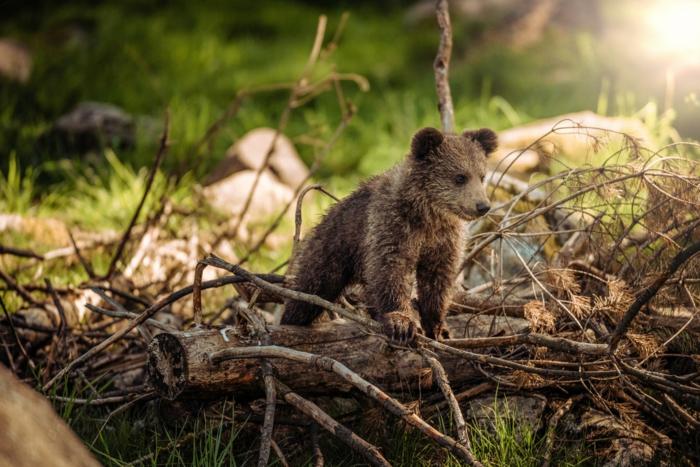 impresionantes imagenes de la vida de los animales, paisajes de montañas y del bosque, originales ideas de imagenes para descargar