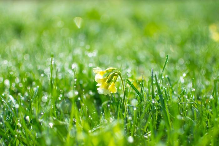 fotos de flores en preciosas imagenes, fondos de pantalla de flores, inspiradores ejempplos de fotos de primavera bonitas