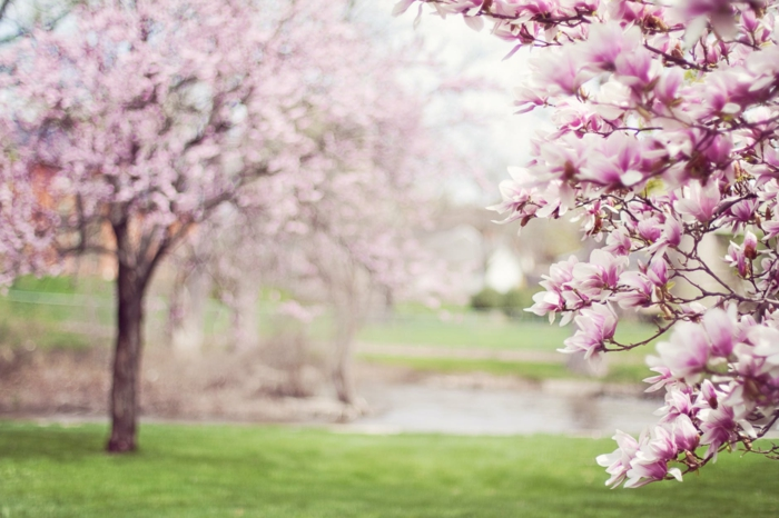 ejemplos de flores de primavera, fondos de pantalla de flores para descargar, bonitas ideas de fotos en color bonito