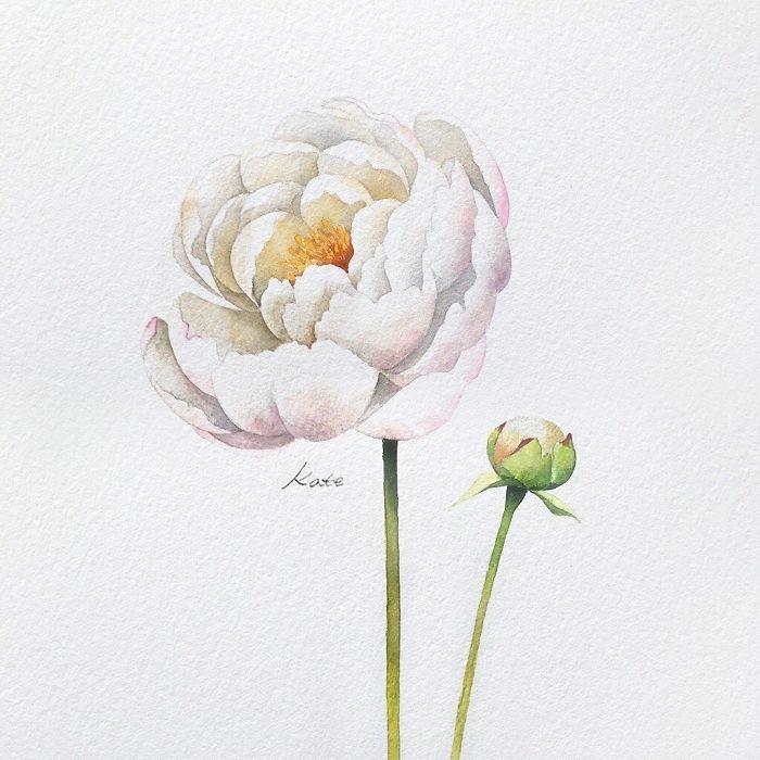imagenes para dibujar bonitas, preciosa peonia en color blanco , dibujos que inspiran y son super faciles para redibujar