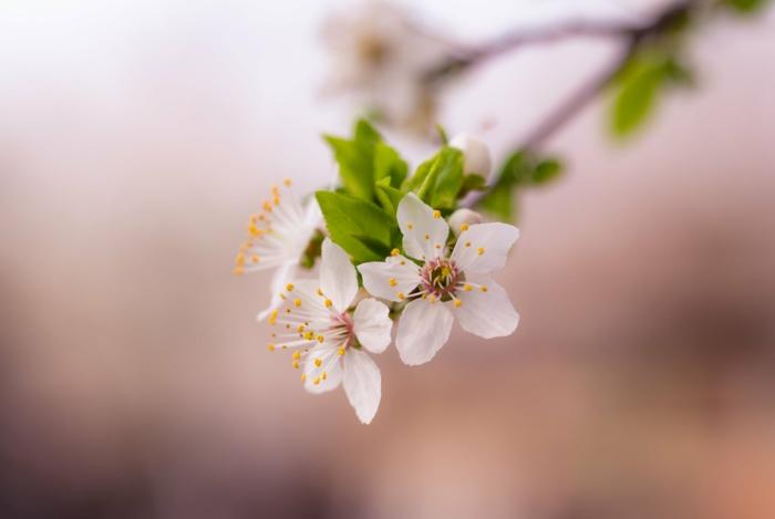 la vida que revive y florece de nuevo en primavera, imagenes de plantas y flores bonitas para descargar, fondos de pantalla primavera е imagenes de paisajes