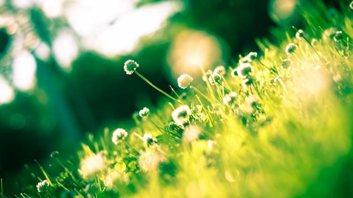 paisajes verdes frescos, fondos de pantalla de flores y naturaleza, descargar fotos de fondos de pantalla bonitos