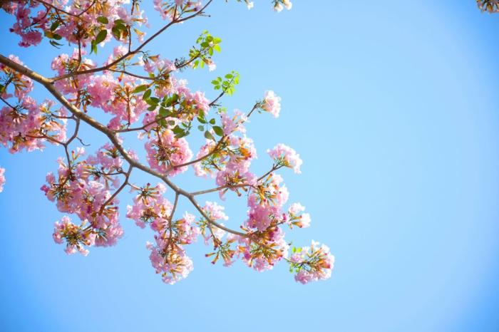 la belleza de los árboles florecidos en primavera, paisajes de montañas y paisajes de la natraleza en verano y primavera