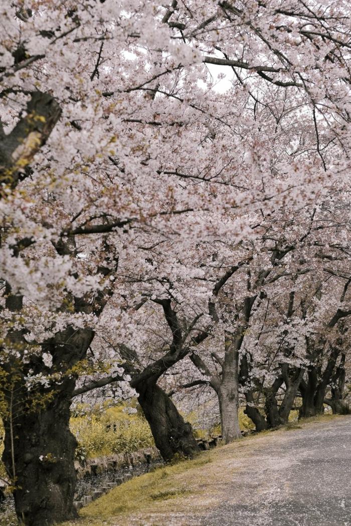 preciosos ejemplos de fotos de primavera originales y bonitos, paisajes hermosos que inspiran, fondos de pantalla de flores