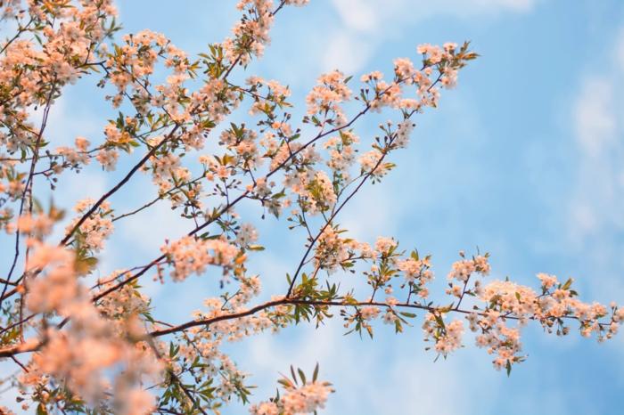 preciosas imagenes de la vida floreciendo en plena primavera, arboles florescidos hermosos, paisajes de montaña bonitos