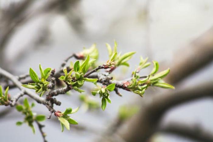 los mejores fondos de pantalla con paisajes naturales, ramas de arbol verdes en primavera, las mejores imagenes para descargar