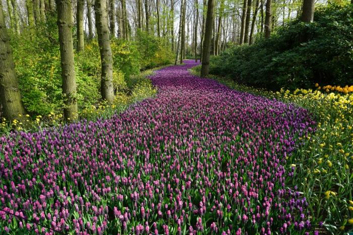 imagenes primavera originales y bonitos, campo de tulipanes silvestres, imagenes primavera que puedes descargar de nuestra galeria