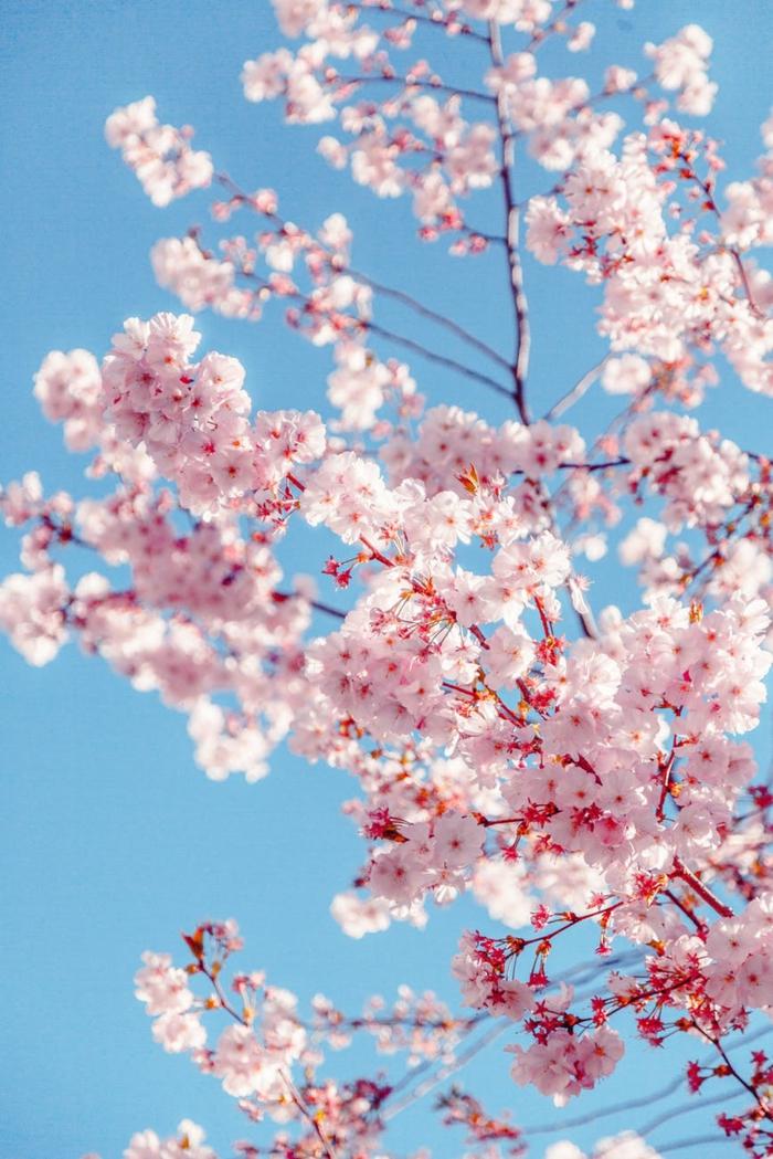 arboles florecidos en primavera, ideas de los mejores fondos de pantalla, fotos de fondos de pantalla con flores en bonitas imagenes
