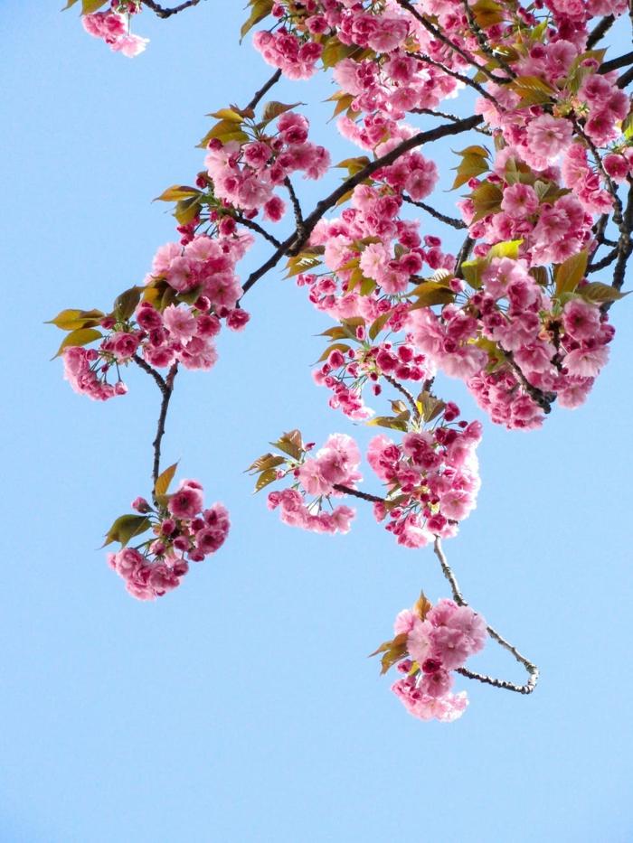 preciosos ejemplos de imagenes primaverales bonitos, fondos de pantalla de flores para descargar, las mejores ideas en fotos