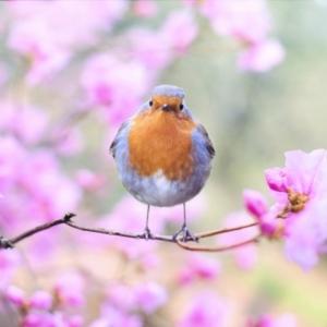 100 imágenes de paisajes de primavera hermosos