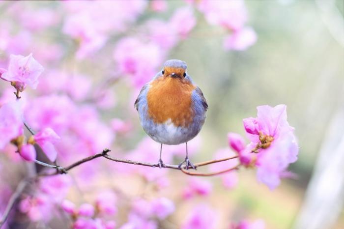 adorables imagenes con animalitos, los paisajes mas tiernos para descargar, paisajes de montañas adorables con aves