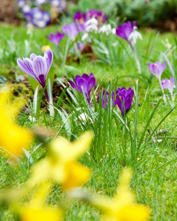 imagenes primavera bonitas, imagenes primavera originales y faciles de hacer, imagenes de flores de primavera
