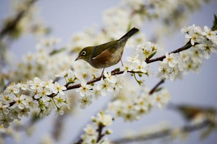 descargar imagenes de naturaleza adorables, animalitos y floreces fotografiados en primavera, imagenes primavera