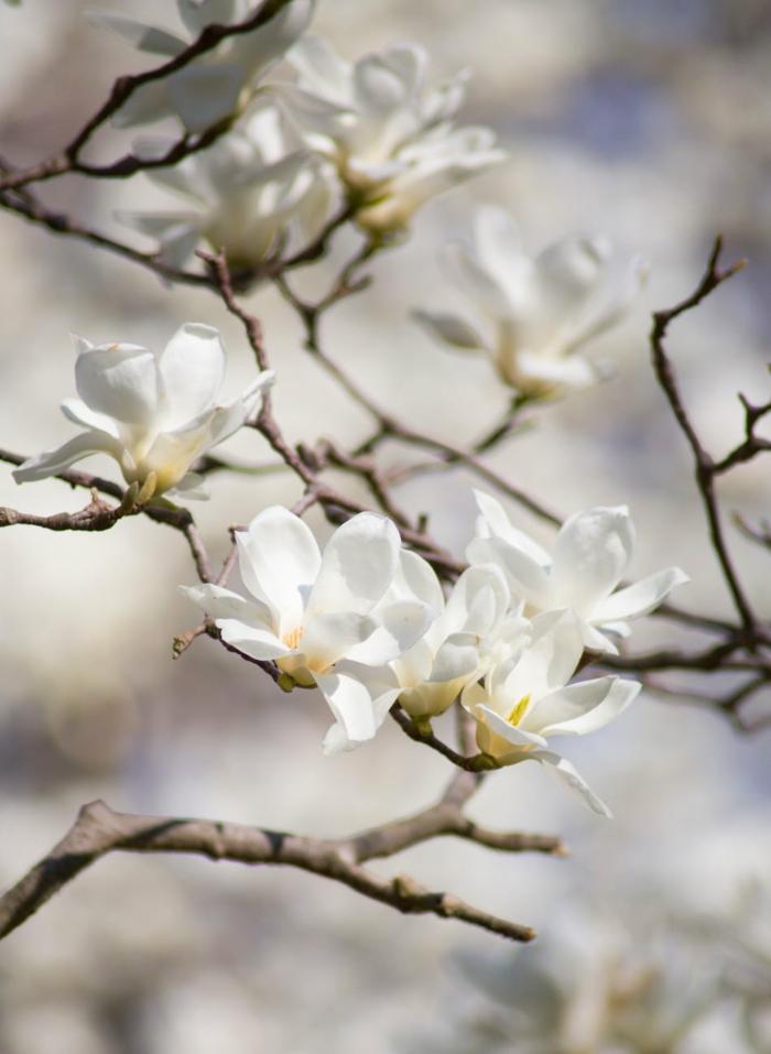 flores hermosas floreciendo en primavera, paisajes de montañas y paisajes de primavera bonitos, fotos de paisajes
