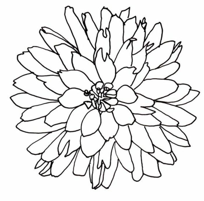 dibujos faciles para dibujar, simpaticas ideas de dibujos faciles para dibujar en casa, bonita flor dibujada a lapiz para calcar
