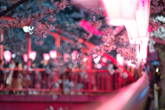 paisajes naturales de la primavera en japon, ideas de fotos para descargar con imagenes naturales, paisajes naturales