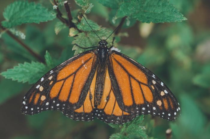 mariposa en bonitos colores, fotografías de alta calidad para contemplar y poner como fondo de pantalla, fotos bonitas y originales