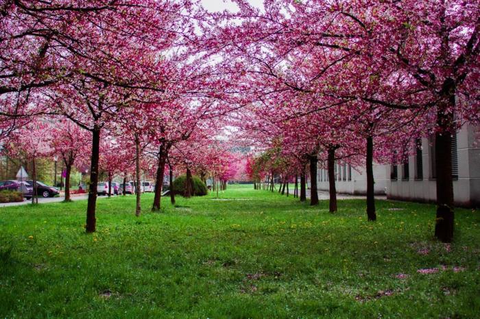 árboles florecidos en primavera, los mejores fondos de pantalla, bonitas fotos de paisajes que inspiran en primavera