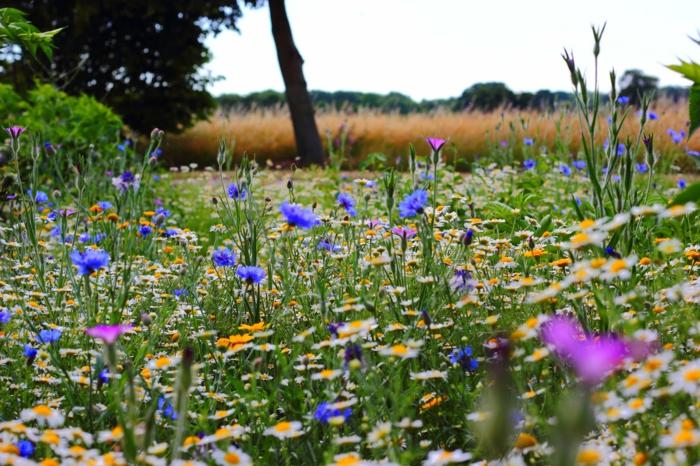 campo de bonitas flores de campo, la simplicitud y la belleza de la primavera en 100 imagenes que puedes descargar gratis
