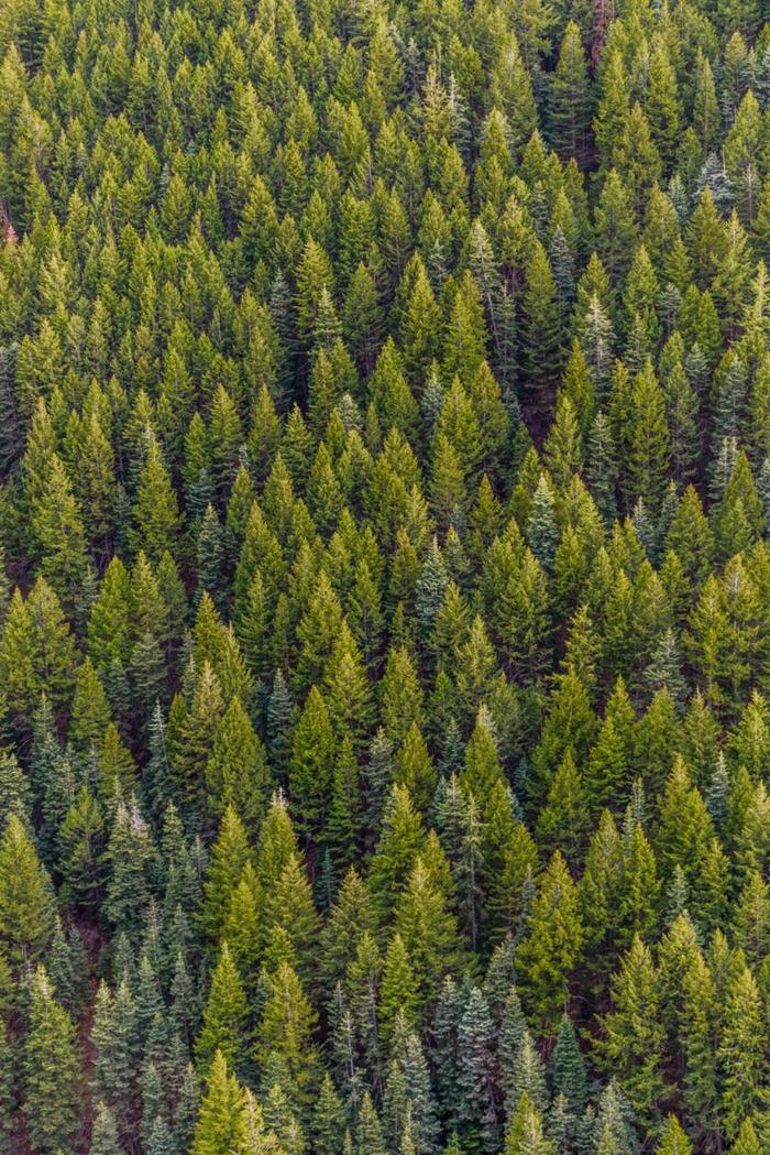 bosque con arboles verde, preciosos paisajes de naturaleza, fondos de pantalla iphone bonitos para descargar, 92 ideas de fotografias calmantes