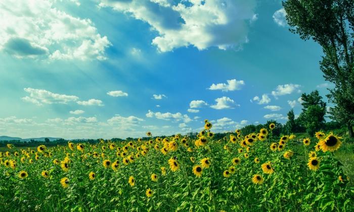 imagenes primavera y verano, originales ideas de imagenes fondo de pantalla coloridas para descargar en casa