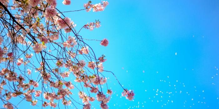 la hermosura del cielo claro y azul en primavera y los frutales florecdos, paisajes naturales bonitos e inspiradores para descargar