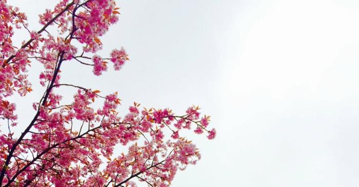 fotos de paisajes bonitos con paisajes naturales para descargar, arboles de primavera hermosos y frutales florecidos