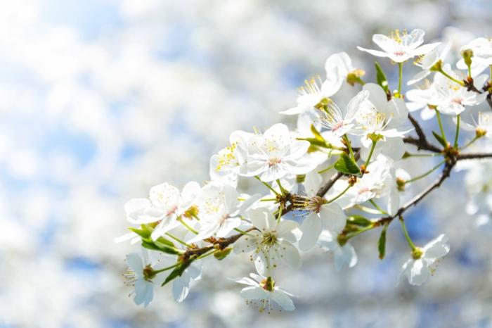 flores bonitas y arboles florecidas originales, ideas de imagenes de primavera originales, fotos para descargar bonitas