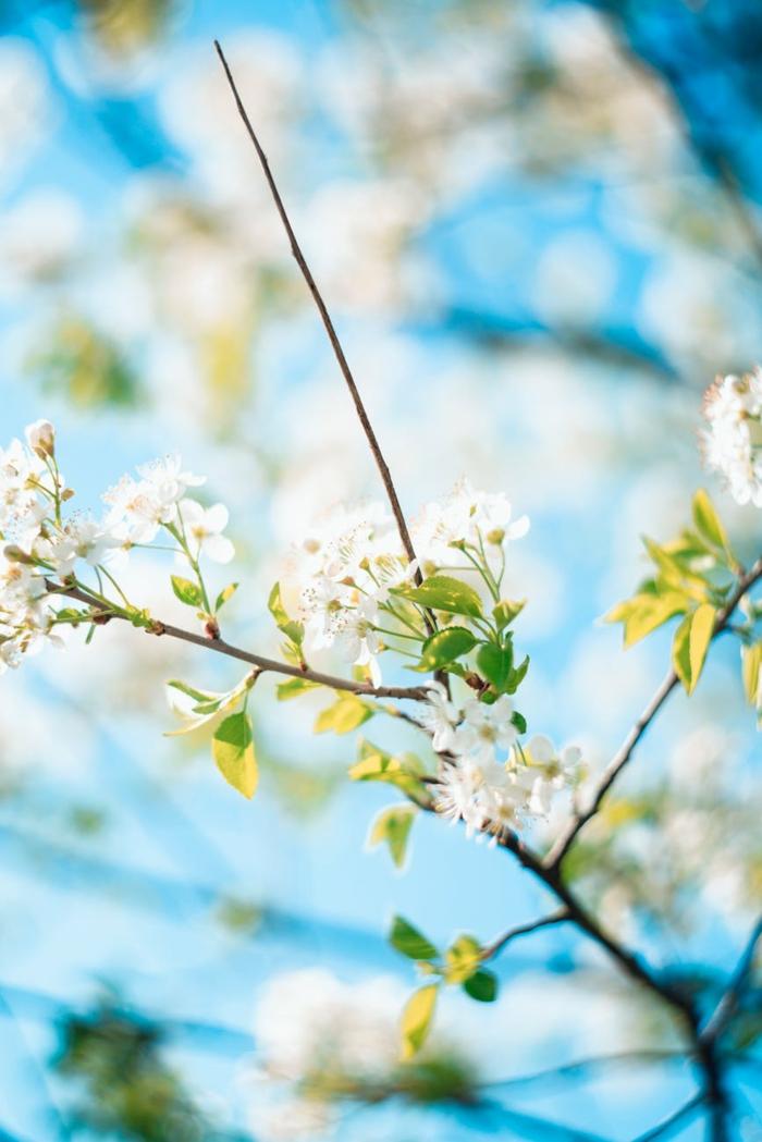 cielo azul y arboles de fruta florecidos en plena primavera, los pequeños detalles para contemplar, fotos de paisajes bonitos